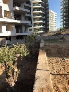 IDEAL Real estate Olive agrden 4
