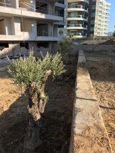 IDEAL Real estate Olive agrden 5